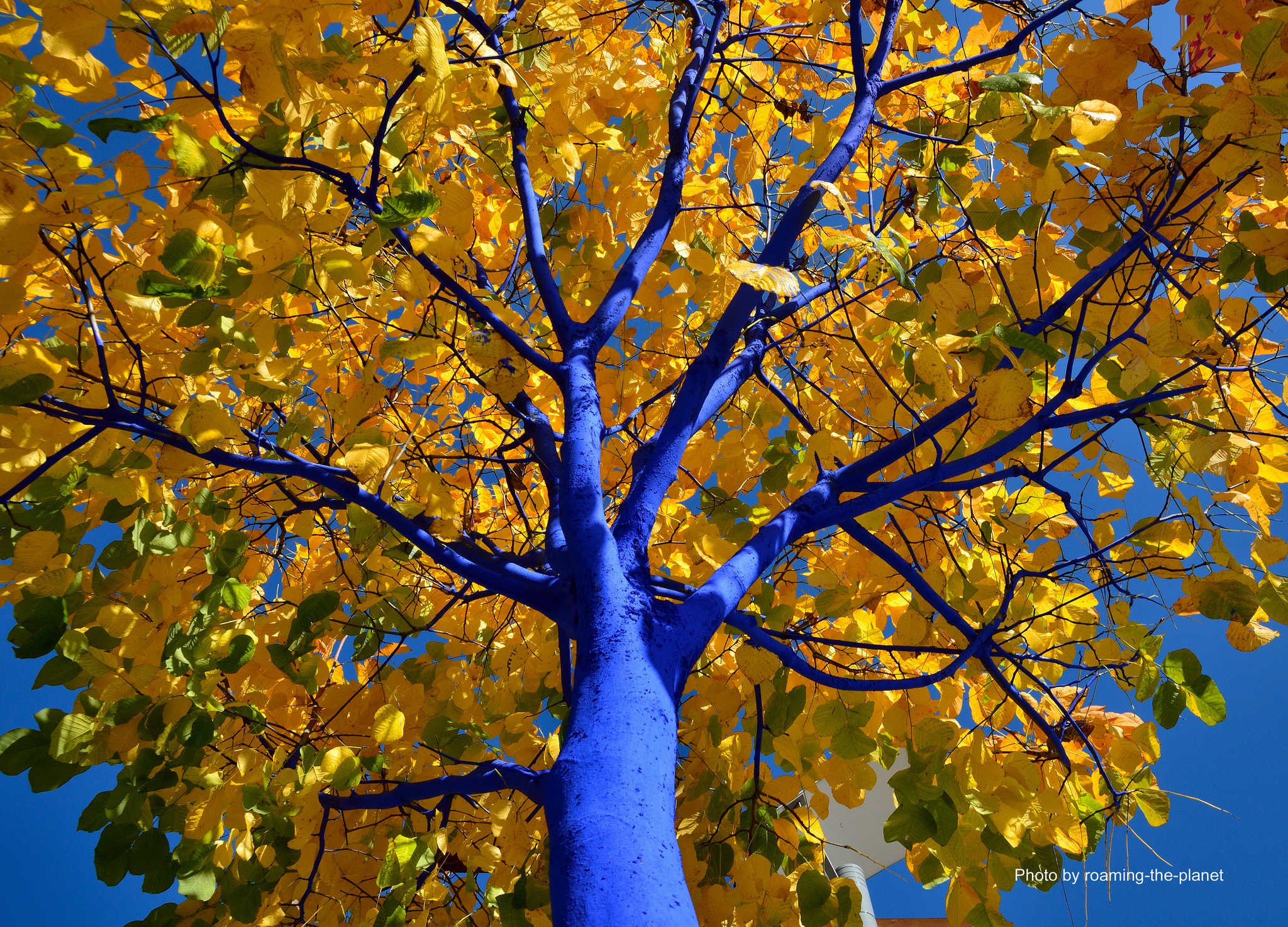 The Blue Trees Project...