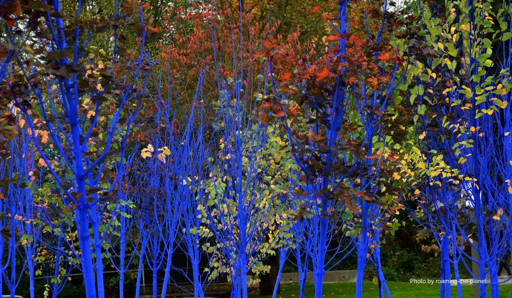 Blue Trees Simons