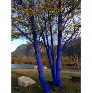 Blue-Trees-Squamish-LNG
